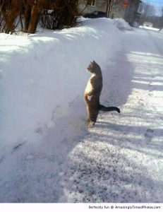 Cat-stands-by-snow-resizecrop--